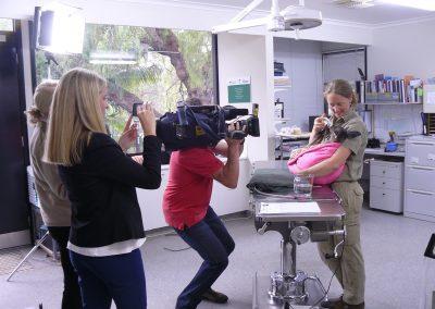ABC TV News at ZoosSA, post Sampson Flat 2015