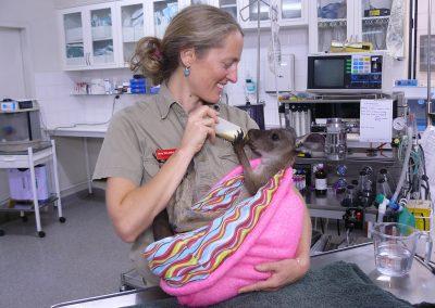 Dr Jenny, ZoosSA quarantine centre, Sampson Flat fire 2015