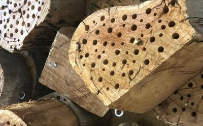 Insect hotels and bird nesting boxes for firegrounds